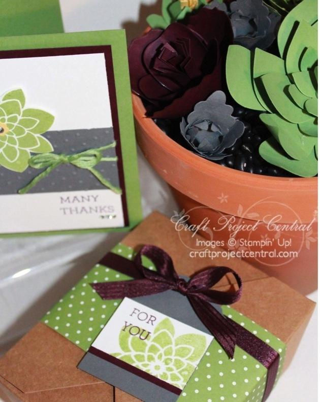 Paper Succulent Garden Gift Set SP